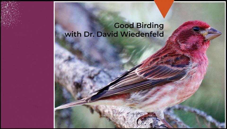 Good Birding with Dr. Wiedenfeld 556X315
